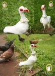 Needle Felted Syrian Baghdadi Pigeon by PicuiDove