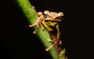Spider frog by sarith21