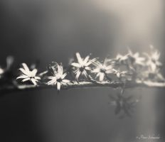 Little stars. by Phototubby