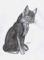 Cat pencil sketch by Fly-Sky-High
