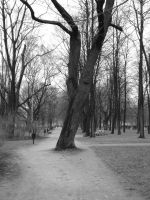 The Park Saski2 by Lukotus