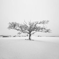 Appledore Oak by SevenHeptagons