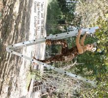 Amely Rose and the Ladder by TheBizarreBirdcage