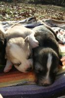 Week Old Puppies in the Sun by greensh