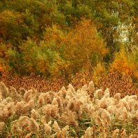 Shades of Autumn 2015, 4 by MadGardens