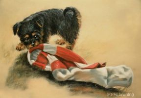 Essendon Supporter - PASTEL DRAWING by AstridBruning