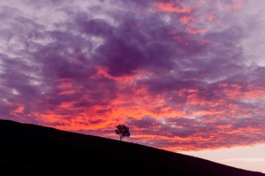 Lonely tree and red morning clouds by empyrea1