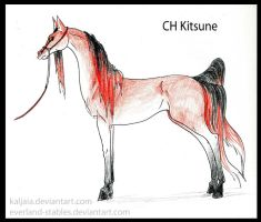 CH Kitsune by Everland-Stables