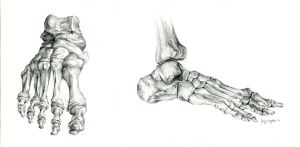 Feet, Skeletal by Calmality