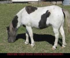 Equine Stock 24 Silver by AstriexEquineStock