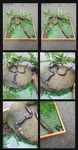 .:Ringneck Snake:. by Knuxtiger4