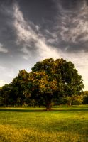 HDR Tree Two by GoDsGiMp