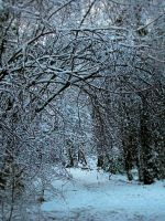 Winter Wonderland 1 by camillo1978