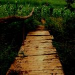 bridge by Ariagne-stock