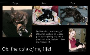 Cats of my life by Eviecats