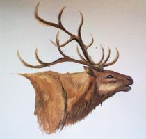 The Mourning Elk by Kumlay