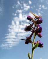 Larkspur In The Sky by Maltese-Naturalist