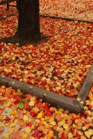 Philly Fall IV Leaves by bewing