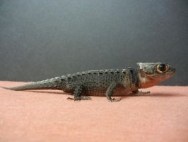 Red Eyed Crocodile Skink 7 by FearBeforeValor