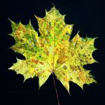 An Autumnal Palette by EarthHart