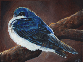 Blue Tree Swallow by MorRokko