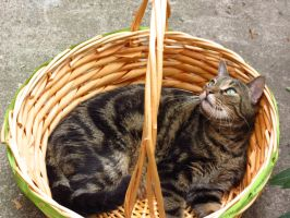 This Is My Favorite Basket by Kitteh-Pawz