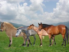 A Group Of Horses by Horses101