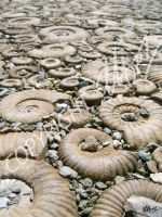 Fossil Paving by LauraHolArt