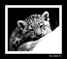 Baby Snow Leopard by Loulou13