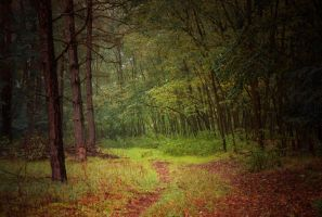 forest by Mandy0x
