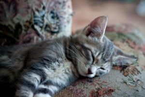 Sleepy Kitty by hasanaljanaby