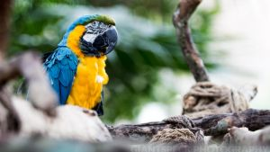 Blue and Yellow Macaw by giantspeck