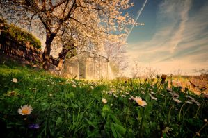 I love Spring II by tomsumartin