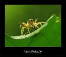 Spider :: Morning Prey by patul