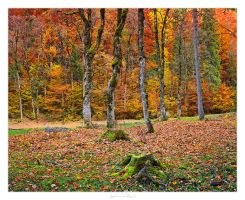 Autumn Colors - 02 by AndreasResch