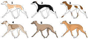 Greyhound adoptables by Palace-Of-Dreams