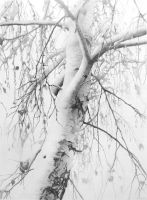 Birch in Snow I by DChernov