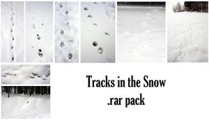 Tracks in the snow by syccas-stock