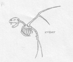 Zubat Skeleton by Mewstor