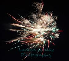 Fireworks by LaurenAshley-Photos