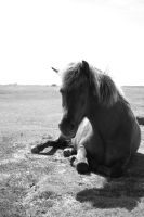 Laying horse Black and white by ProbablyThePenguin