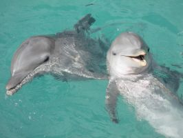 Dolphin Smile by LuxuryCat