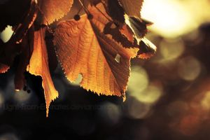 autumn. .. by light-from-Emirates