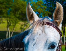 horse eye and ears by dressageart13