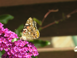 Butterfly 22-07-2015 -2 by 69raywwf