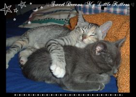 Sweet Dreams My Little Kittens by Avatar-Grow