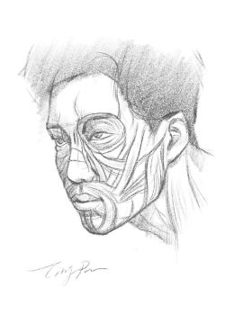 Face Muscle Anatomy Analysis Drawing by pt83730