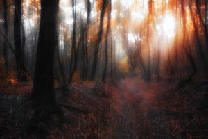 october sunshine by ildiko-neer