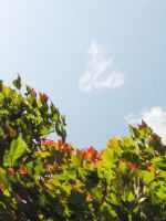 leaves and sky stock by thiselectricheart