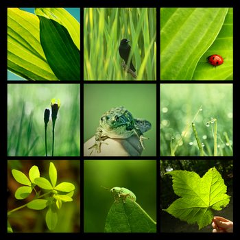 3x3 green nature photography by Aimelle